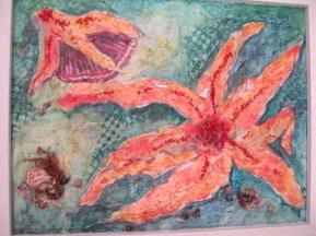 Seven Arm Starfish