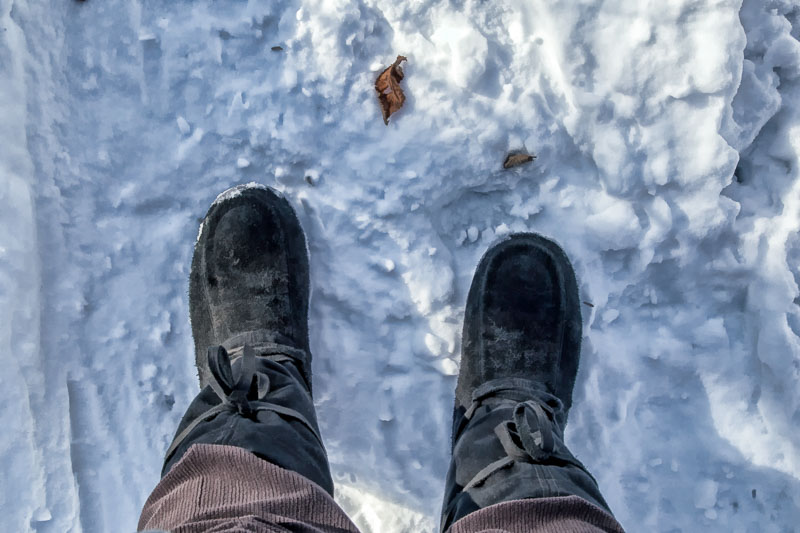 Winter Hike at Carver Park Reserve
