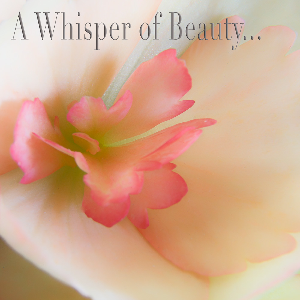 A Whisper of Beauty