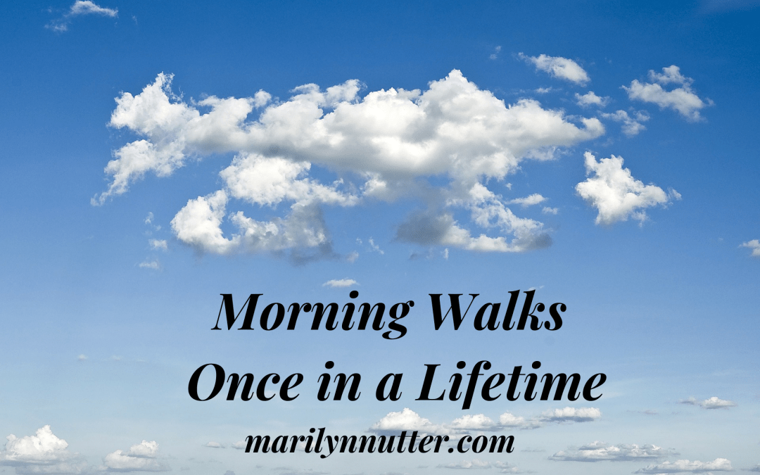 Morning Walks: Once in a Lifetime