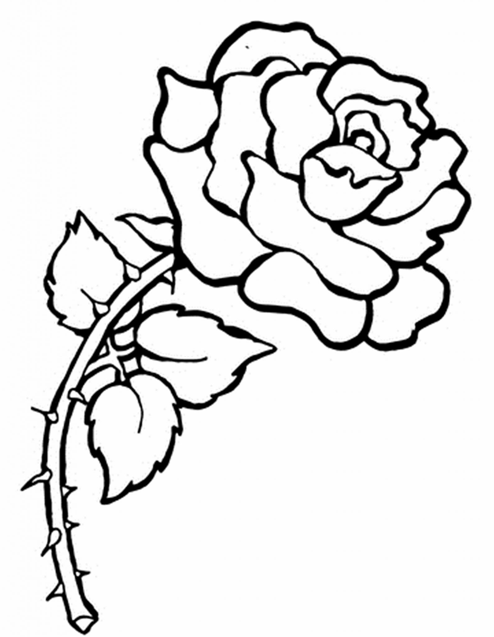 Contoh Gambar Mewarnai Gambar Bunga Ros Kataucap