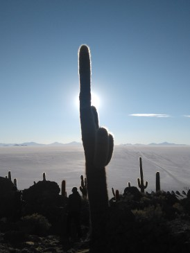 Cactus pointing up