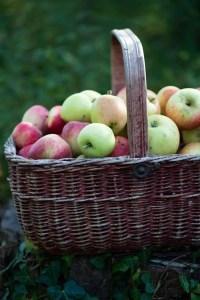 æbler. bedstefars skæg