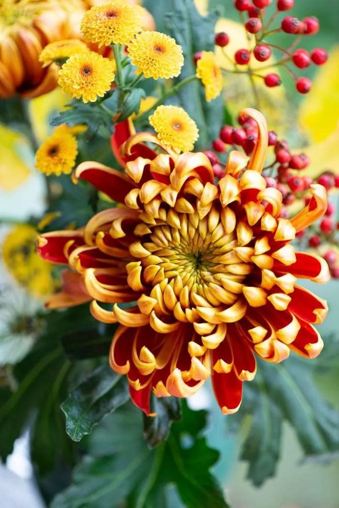 Orange blomster til Mortens aften