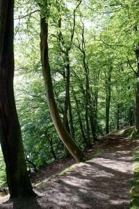 Bøgeskov på turen rundt om inderøen