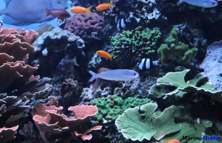 Multilevel Aquarium in Mumbai-1