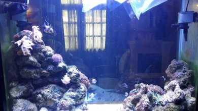 Photo of Aquarium hobby or a product we talk about