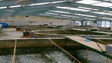 Photo of Haryana to set up an ornamental fish hatchery in Jhajjar