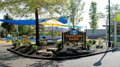 Photo of Adventure Aquarium Re-Opens Penguin Park
