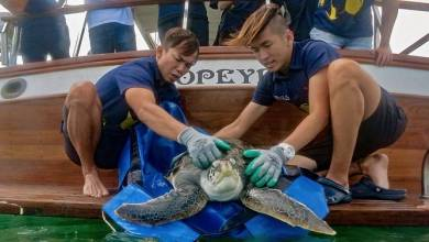 Photo of Two rescued sea turtles released into the Singapore sea