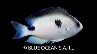 Blue Ocean SARL