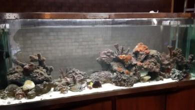 Marine Aquarium to Buy