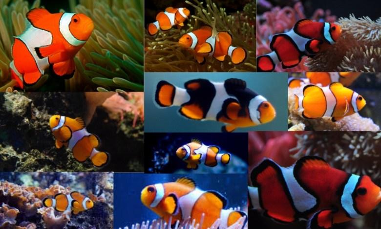 Clowns_Mumbai's Marine Biodiversity Center