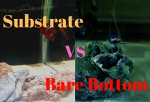 Substrate vs Bare Bottom in a Saltwater Aquarium