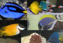 Reef Fish and Creatures