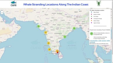 Photo of Whale Stranding Infographics on the Indian Coastline
