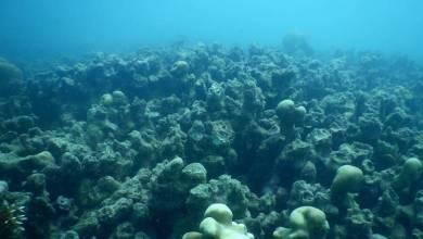 Ninety Percent of Sri Lanka's Coral Reefs Are Dead