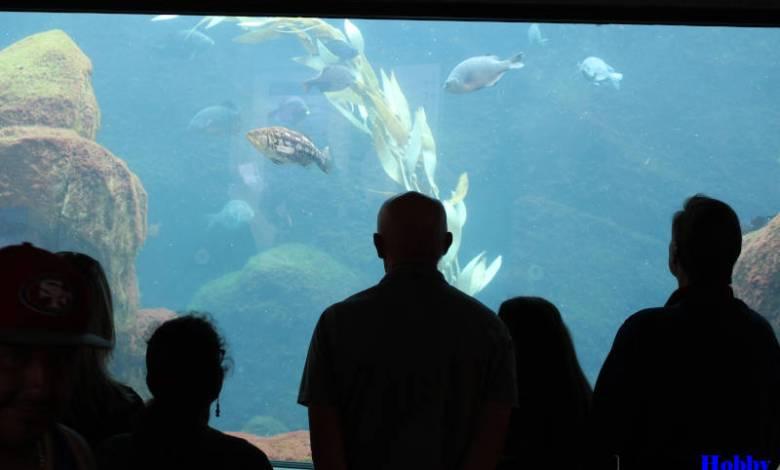 Multilevel Aquarium in Mumbai
