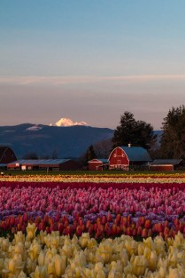 Mount Baker in the background.