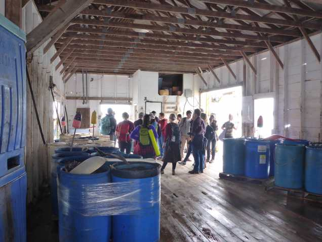 Students inside the coop with lots of bait. Photo by Natalie Springuel