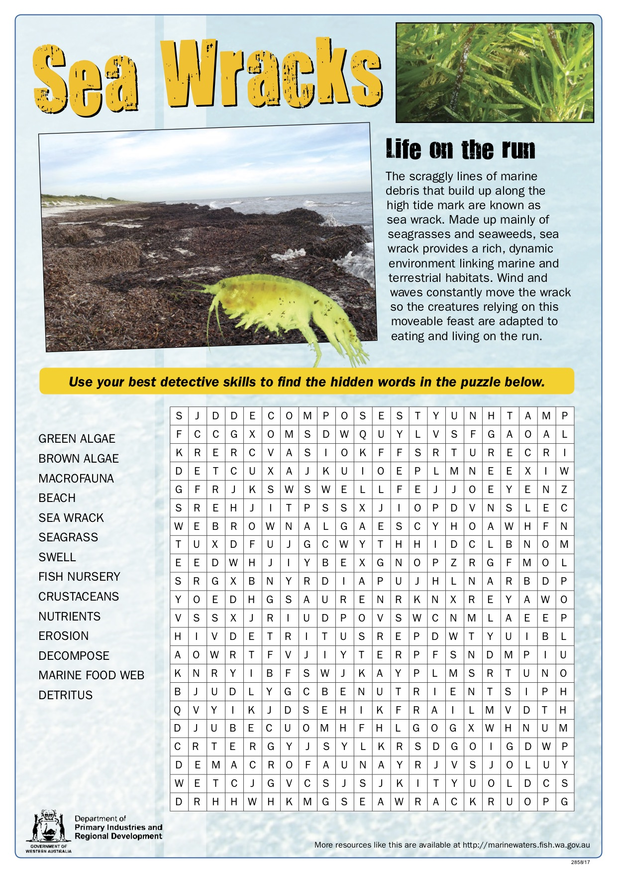 Fishy Fun Sheet Sea Wracks