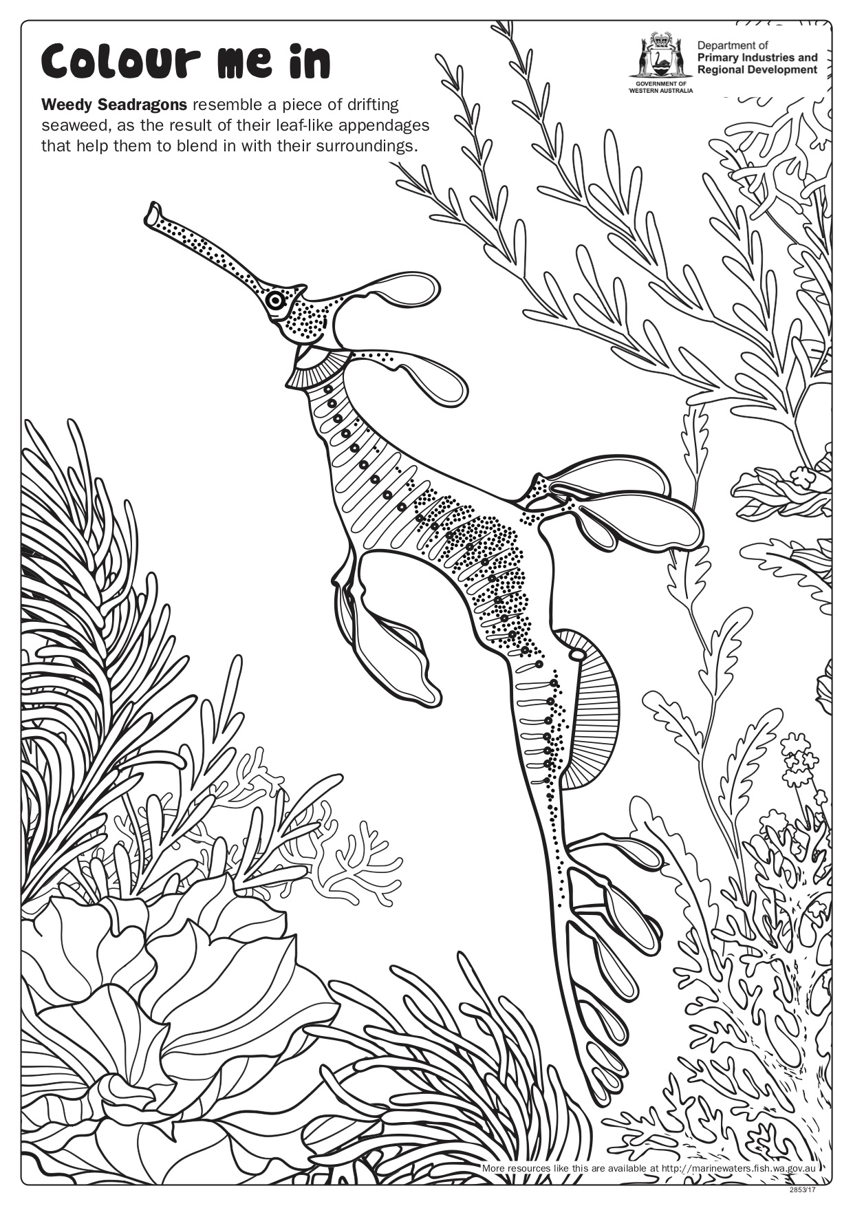 Fishy Fun Sheet Weedy Seadragon