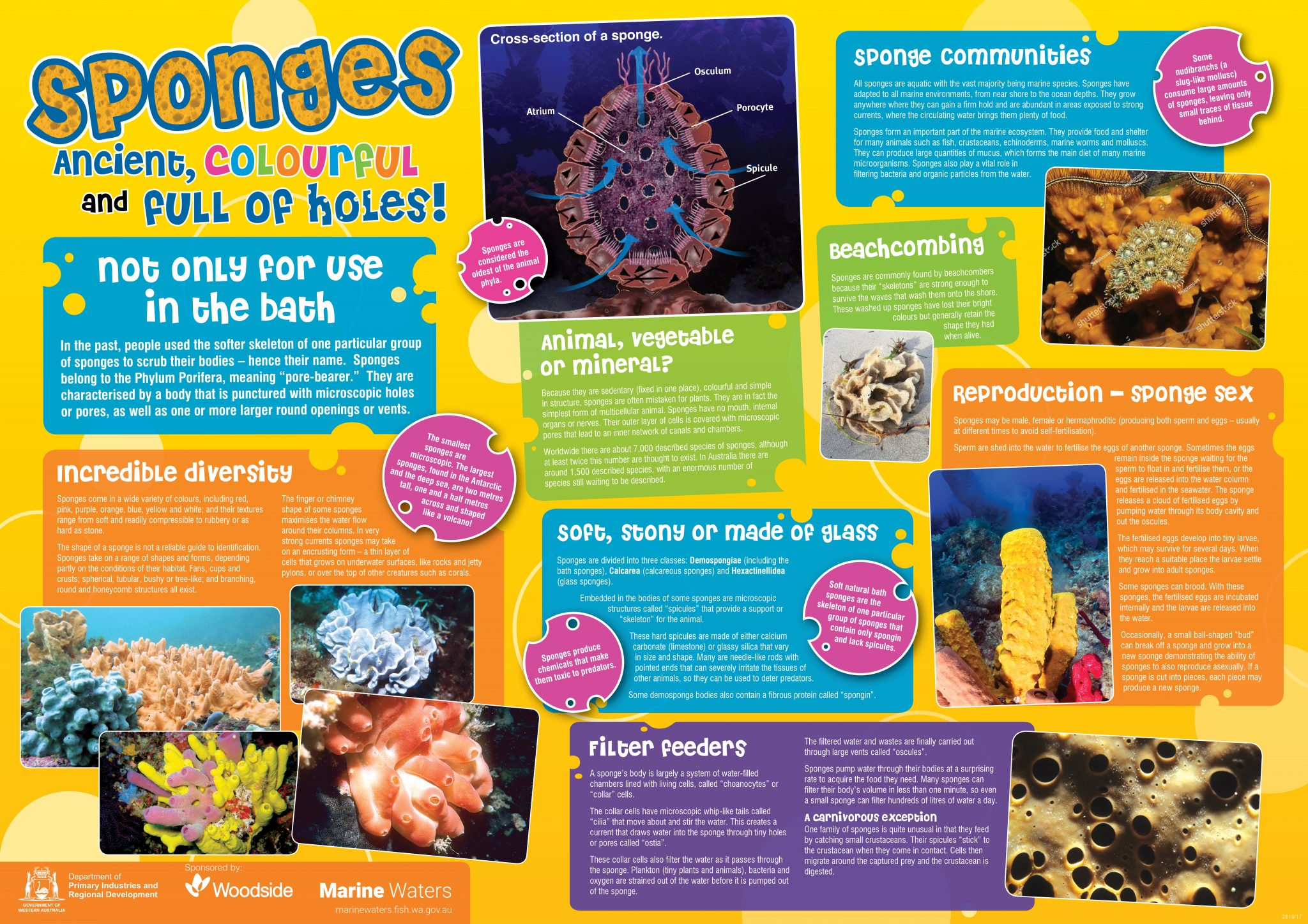 Poster Sponges Department Of Primary Industries And