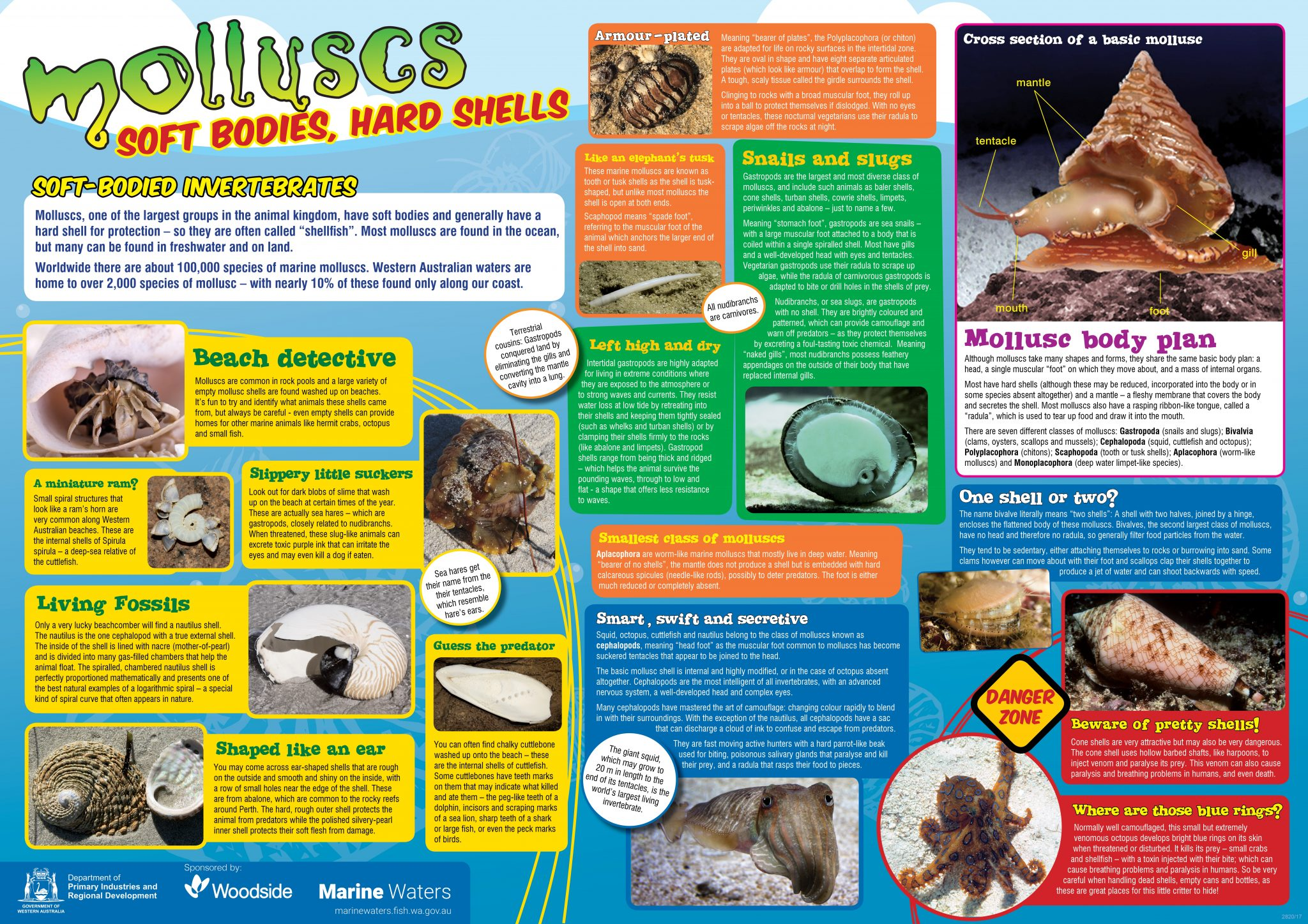 Poster Molluscs Department Of Primary Industries And