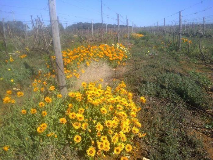 Fryers-cove-vineyards