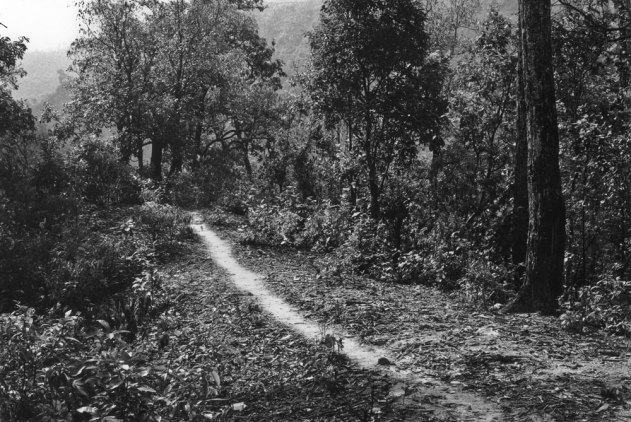 Brushed Path A Line in Nepal, Richard Long 1983