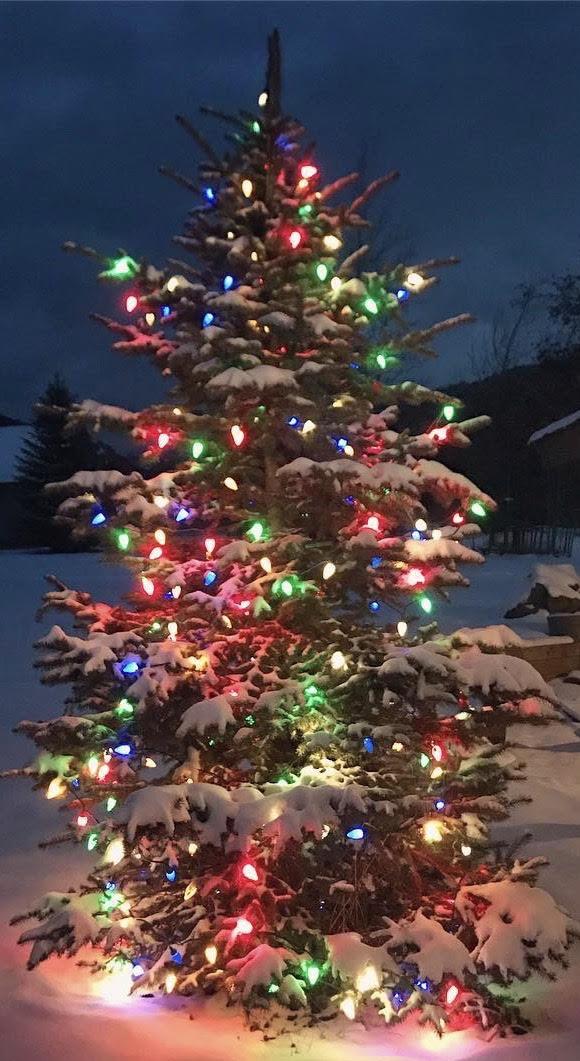 pleasant valley christmas tree lighting