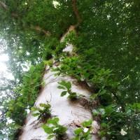 Bomen zijn net mensen