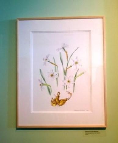 Tentoonstelling Museum De Zwarte Tulp, dichtersnarcis