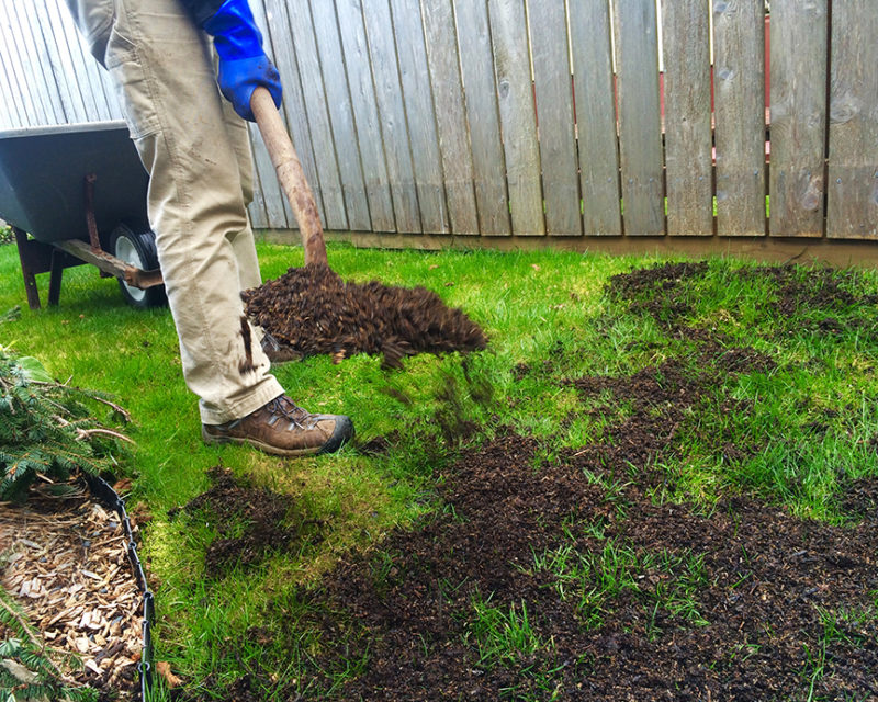best lawn fertilizer, lawn care, organic gardening tips