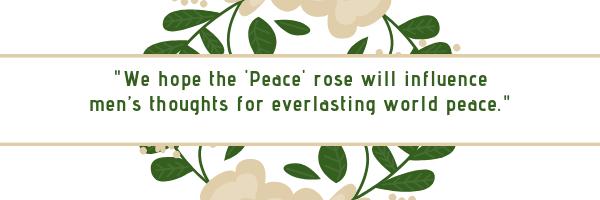 Peace rose, rose, world peace, WWII