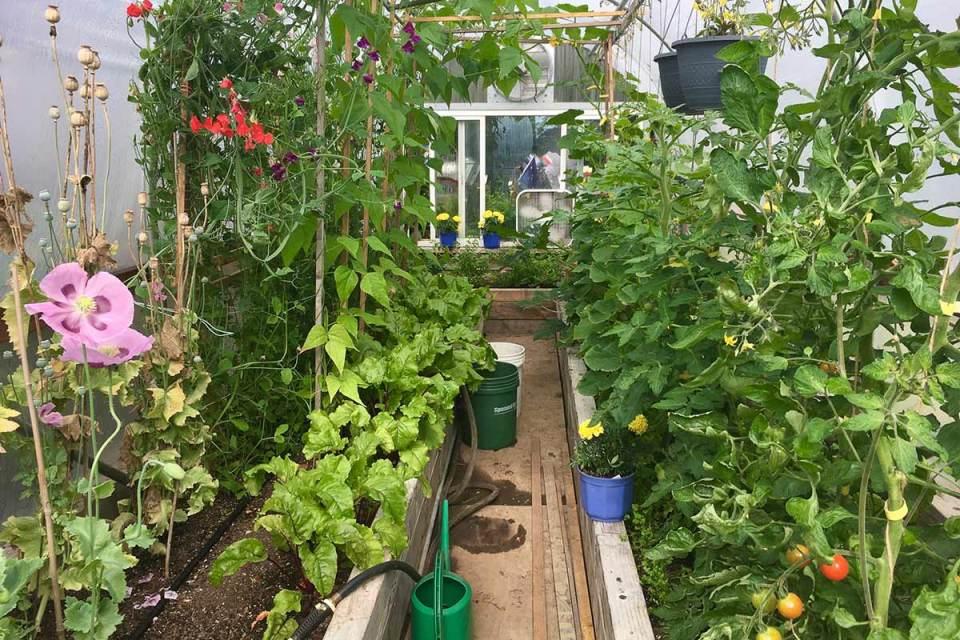 Organic Gardening Tips, Cool Climate Gardening