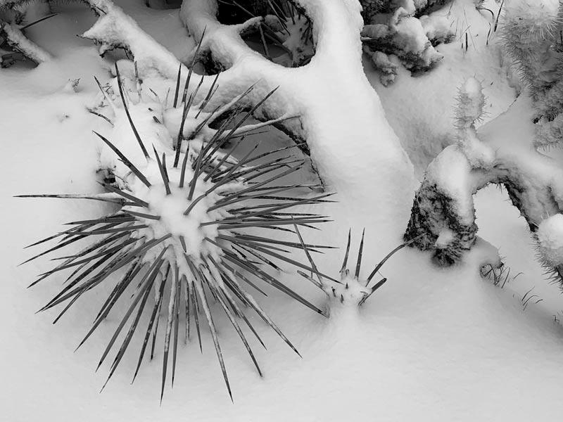 Joshua Tree National Park, snow, cactus, bucket list ideas, nature photography