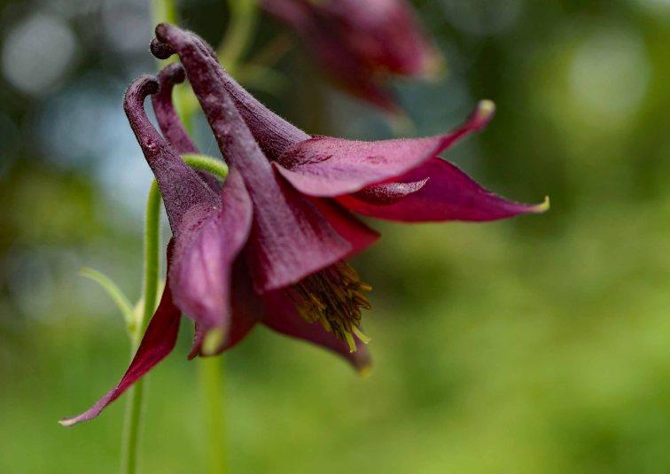 Flower Detail 4