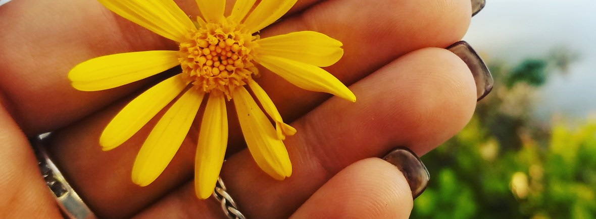 small yellow flower in hand