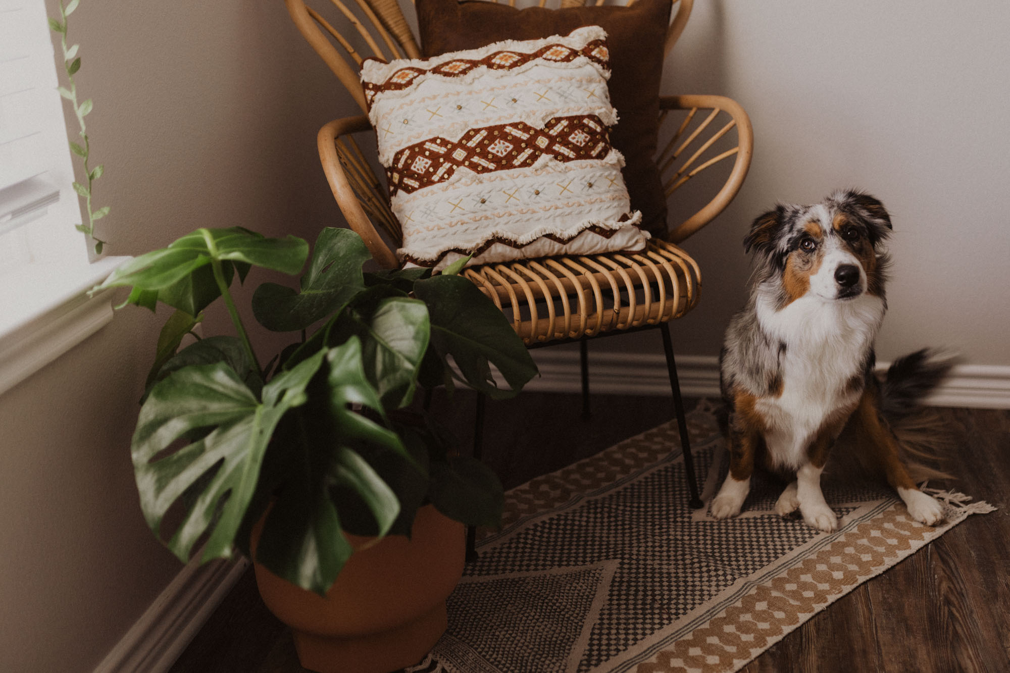 Adorable home office with a cute dog hanging out