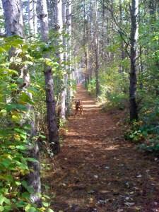 Zuri in woods