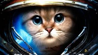 space cat helmet