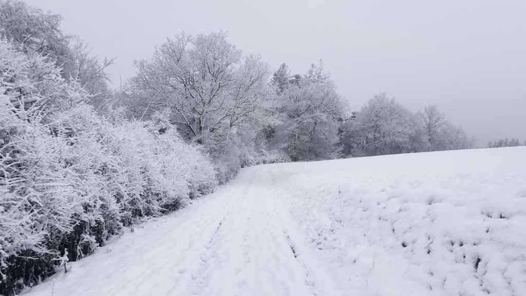 Iarnape camp -  Iarna prin padure si zapada - momente in natura - video