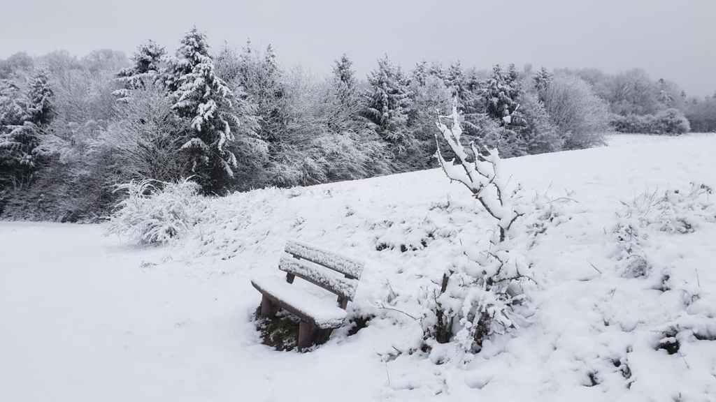 Iarna pe camp - zapada - padure