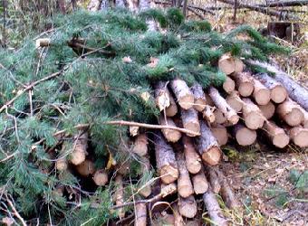 «Черные лесорубы» облюбовали Моркинский район