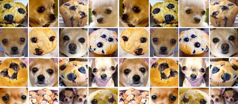 Chihuahua Or Muffin My Search For The Best Computer Vision Api