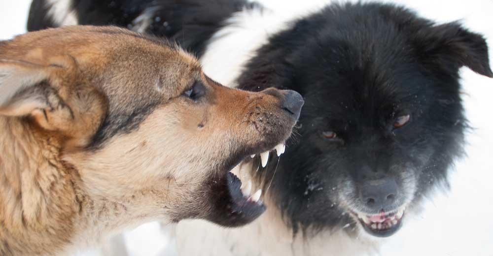 Odpoklic psa. Kako naj začnem s priklicom psa. Kako naj naredim dobro navezavo z psom. Pes me ignorira. Pes se ne zmeni za klicanje. Noče se igrati z mano. kako se igrati z psom. kako postati dober skrbnik psa. Pes mi noče prinesti igrače. Kaj delam narobe pri svojem psu. Pes beži od mene. Pes uničuje in grize pohištvo. Pes je napadalen. Kako prevzgojiti psa. Kako vzgojiti psa iz zavetišča. Pes iz zavetišča. Varstvo psa, šolanje psa.