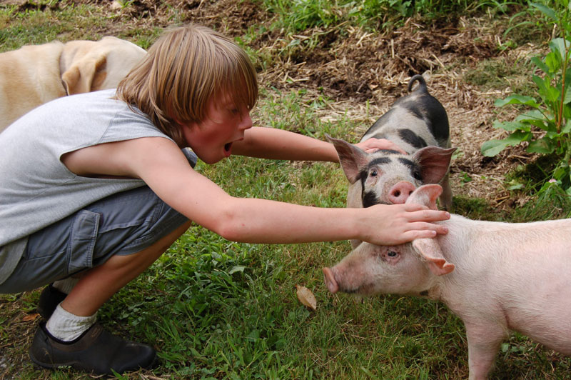 Evan-with-Pigs