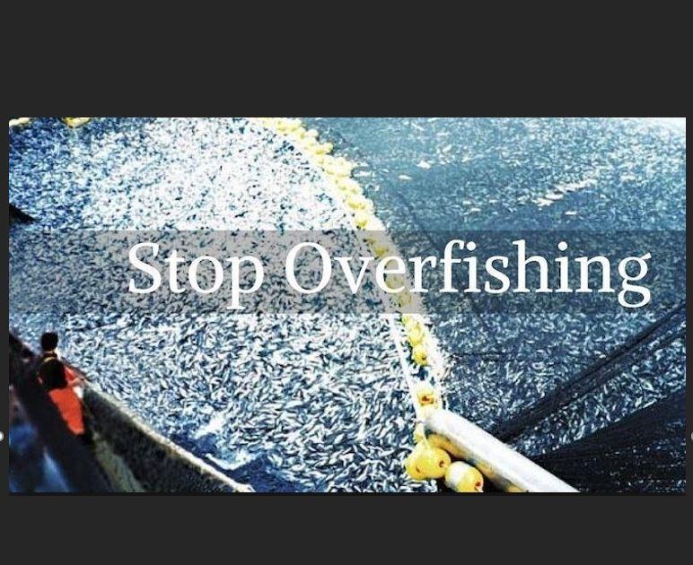 INSTA Stop Overfishing.JPG