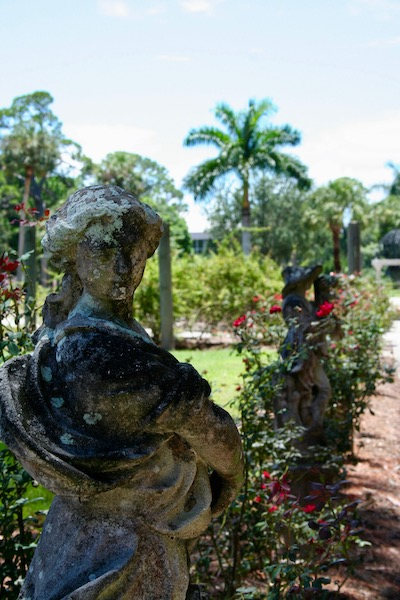 John Ringling- The Ringling – Ca d'Zan – The Ringling Mansion – Sarasota Florida- State Art Museum of Florida - Mable's Rose Garden